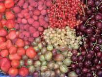Gemüseanbau Heidelberg, Pfisterer Obstbau, Birnenverkauf Pfisterer