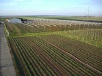 Hagelnetz Pfisterer, Obstbau Pfisterer, Schutzsystem Gemüseanbau
